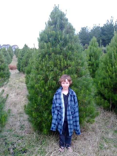 standard_tree